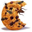 Bugs for Dinner?