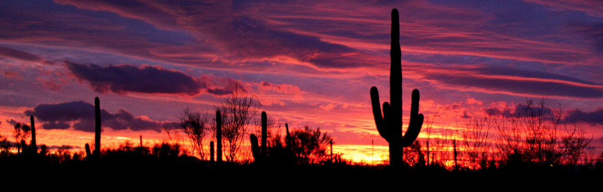 sunset-cactus1_edited