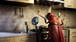 Funny-Cockroach-Cooking-1024x576
