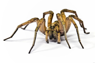 Did you know that spiders are not insects.