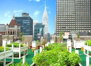 Waldorf-Astoria-72FX1.jpg
