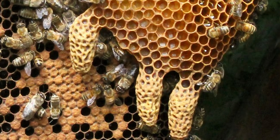 Beekeeping:  The Sequel- Managing colonies after their first winter