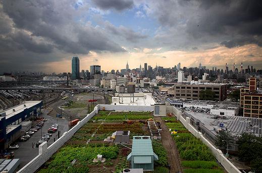 Brooklyn-Grange-rooftop-farm-New-York-Ci