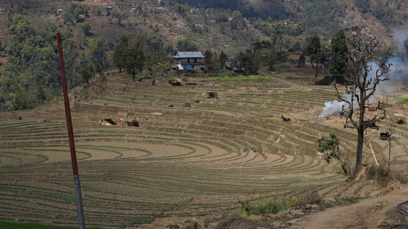 More than 50 years ago, the land in the photo belonged to many different Rai families. They sold their land to other families to support their Dashain and other expenses. During the 1980s, one family bought all the pieces of land and sold them in one piece to the late Jaya Prasad Rai for NRs 100,000. This fertile land now supports four families in the village.