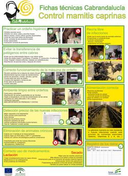 Control mamitis caprinas