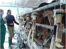 La Asociación visita la primera ganadería de animales de Raza Caprina Payoya en Cataluña.