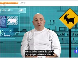 El chivo Payoyo protagonista del programa 'S.O.S Alimentos. Karra al rescate' de TVE