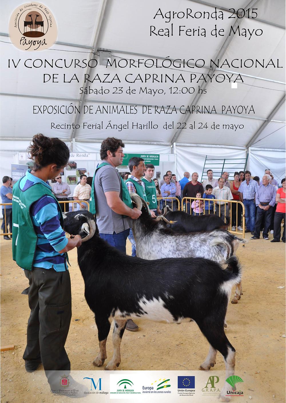 cartel-concurso-morfologico-payoya-2015-2.jpg