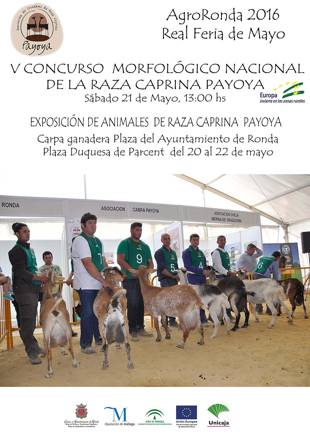 V Concurso Morfológico Payoya