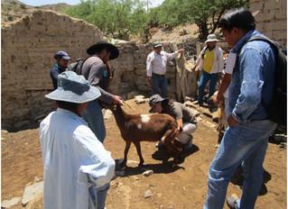 Compartiendo experiencias con ganaderos de Bolivia
