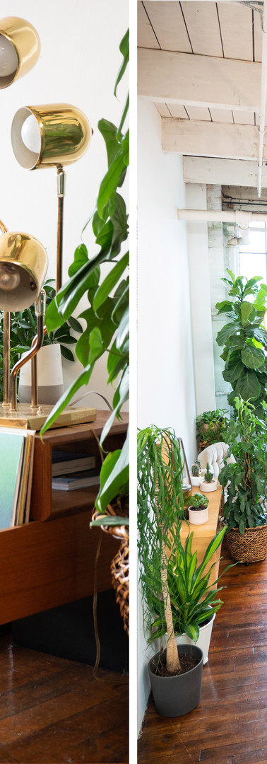 Green and Gold Studio - DUO3.jpg