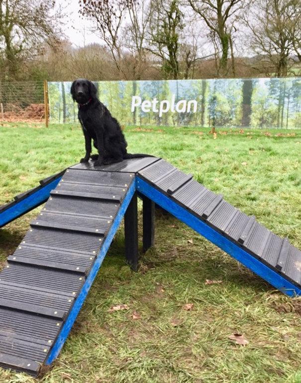 Dog Adventure Park