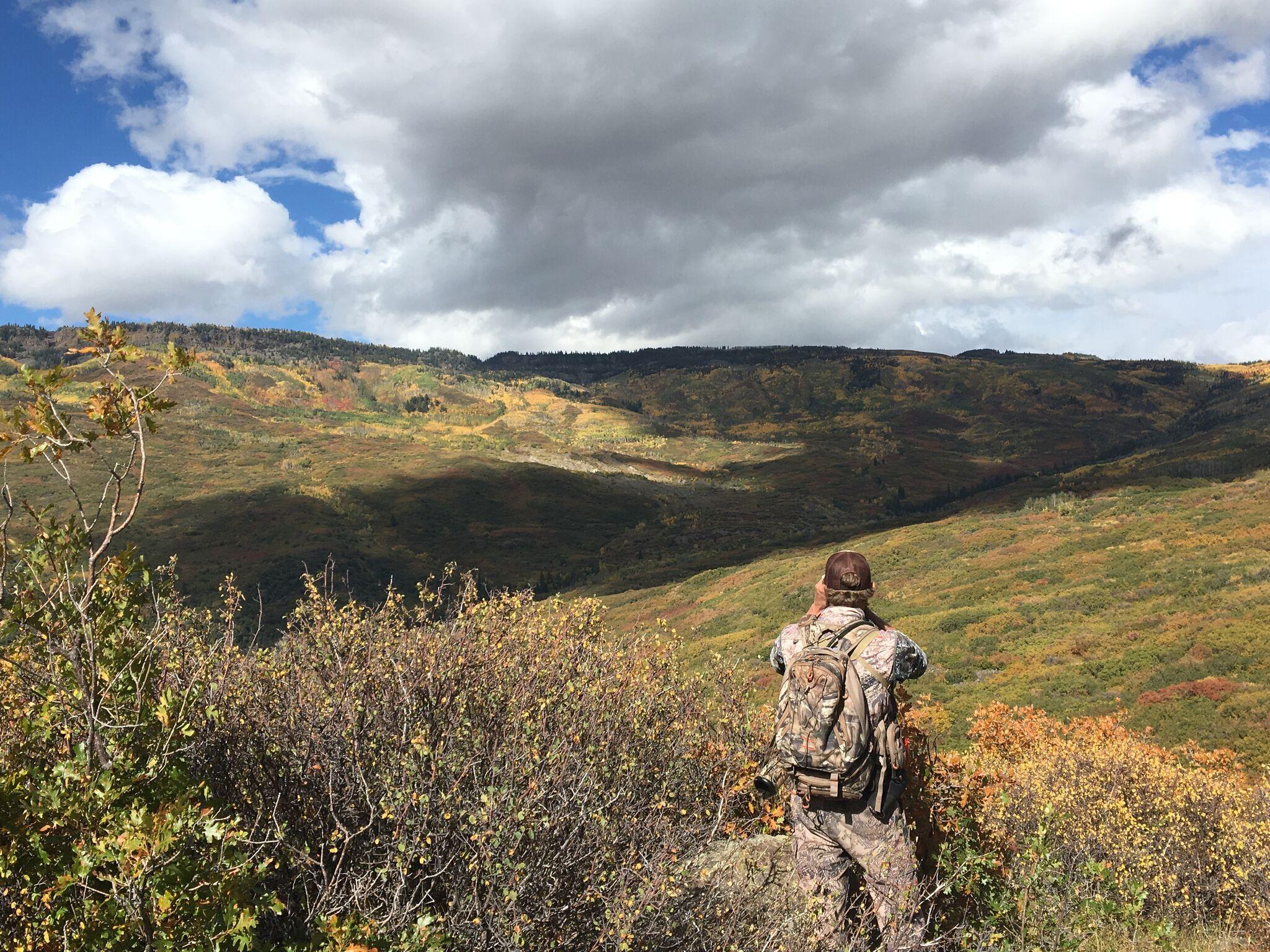 Mesa View