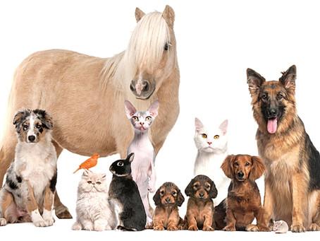 Prendre soin de nos animaux naturellement