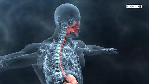 microbiote intestinal - son fonctionnement et l'importance de prendre soin de sa flore instestinale