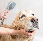chien-sous-la-douche.jpg