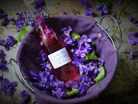 Vinaigre violat, le vinaigre aromatisé aux fleurs de violette