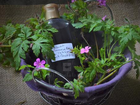Macérat huileux de Géranium Herbe à Robert (cicatrisant, antimoustique)