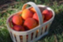 Confiture abricot et tilleul