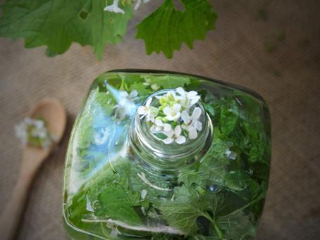 Vinaigre parfumé à l'alliaire, l'herbe à ail