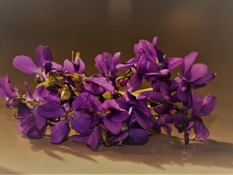 Violettes du jardin cristallisées au deshydrateur