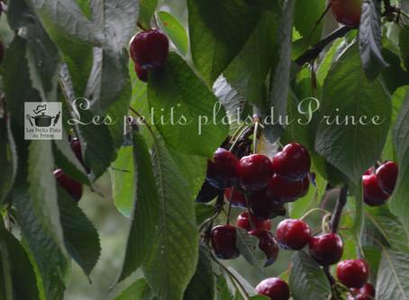 La cerise, premier fruit à noyau de l'année