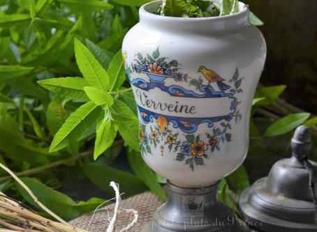 Déshydratation de verveine citronnelle du jardin pour infusions