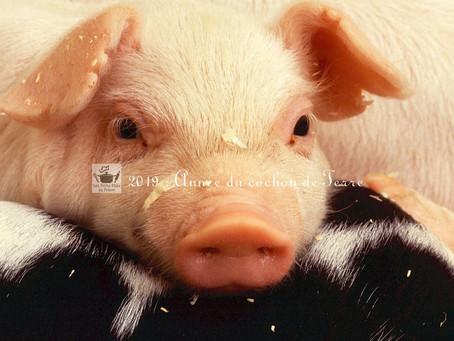 2019 : l'année du cochon de terre du Nouvel an chinois