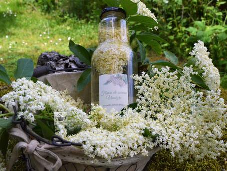 Vinaigre aux fleurs de sureau noir