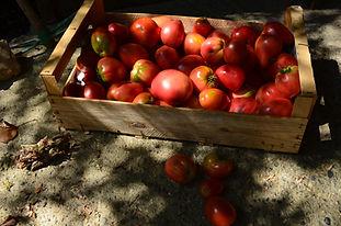 Tomates et courgettes confites