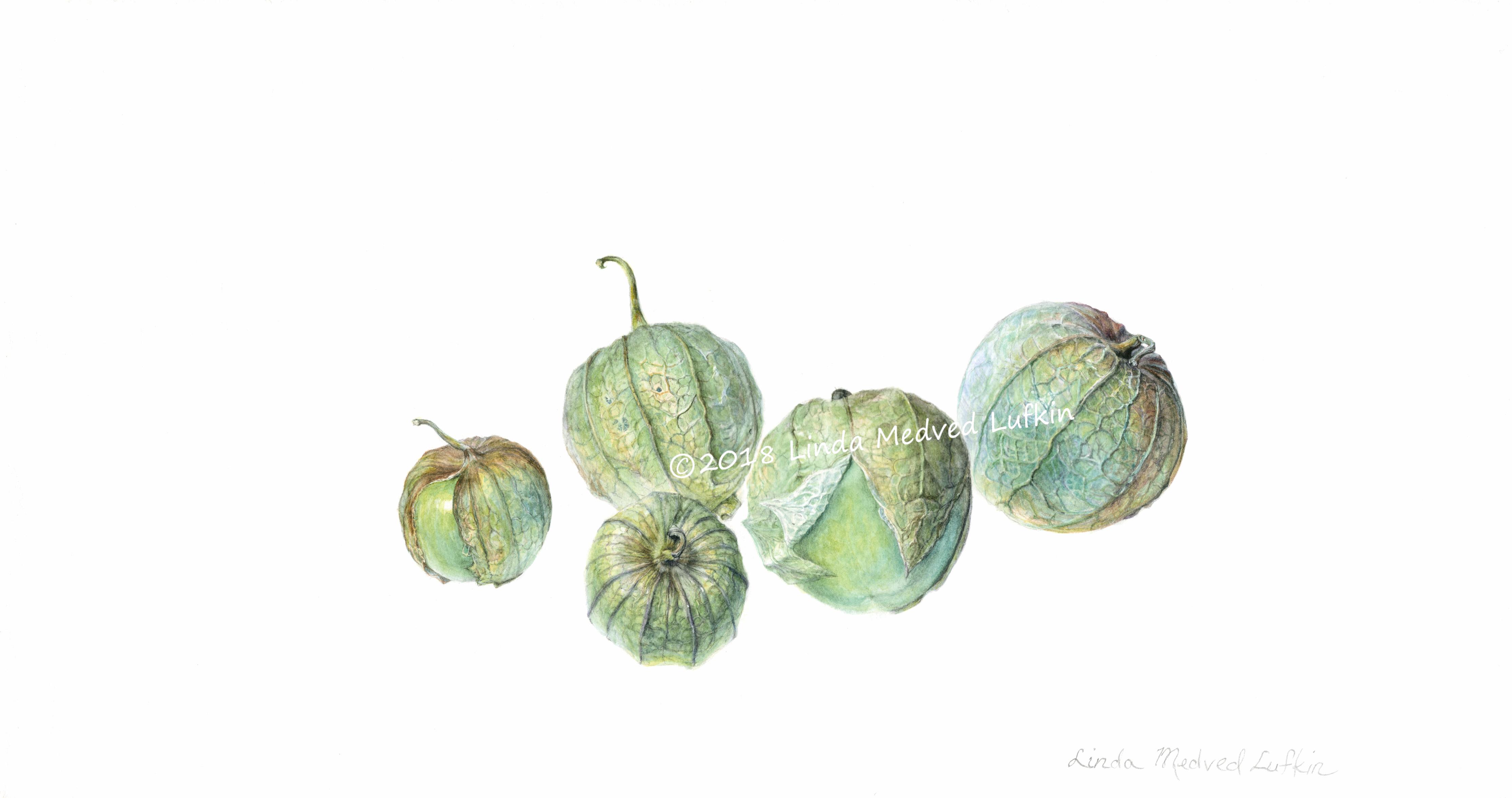 Tomatilloes