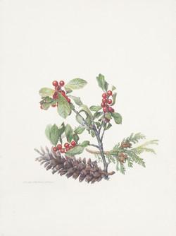 Winterberry, White Pine Cone & Arborvitae