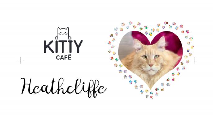Heathcliffe Mighty Mug - Pre-order