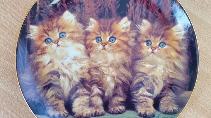 3 kitten display plate