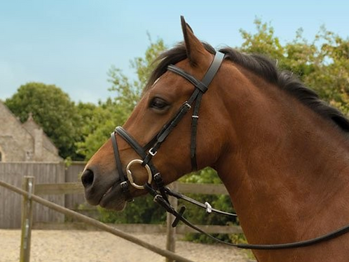 Cavesson Bridle with Flash Noseband and Reins (220)