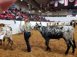 Ft. Worth Stock Show