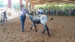 East Texas State Fair - Tyler