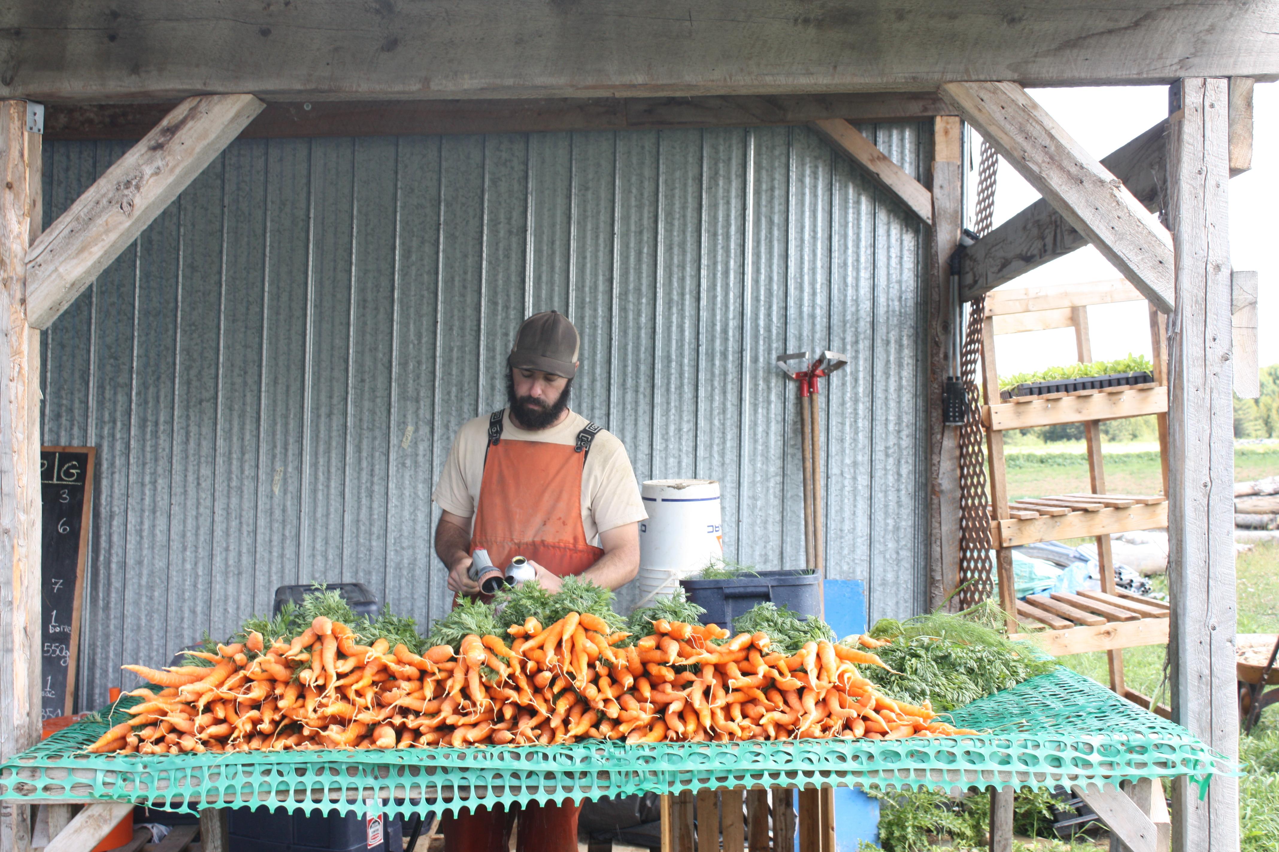 Lavage des carottes