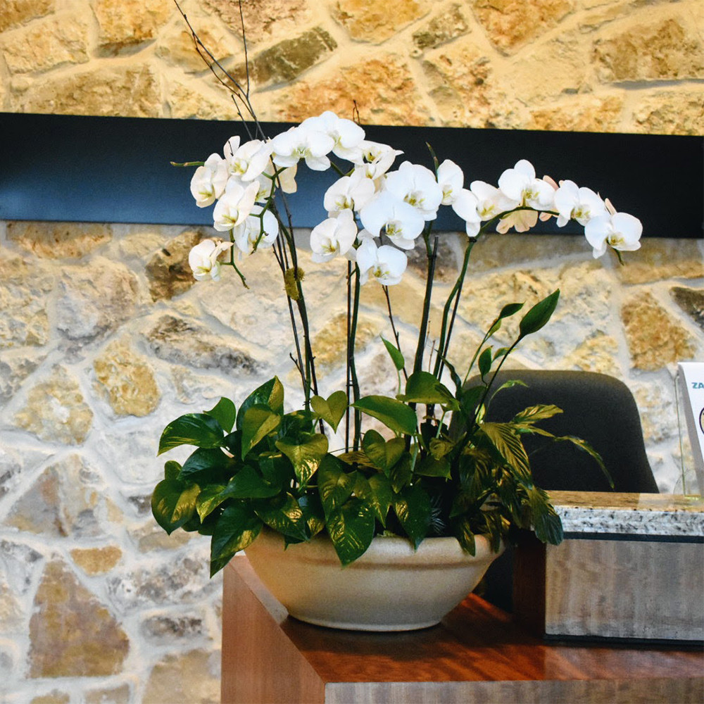 White orchids show their beauty in a reception area.
