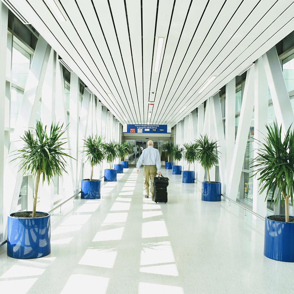 San Antonio Airport. Blue planters create a vivid contrast to white skywalk.