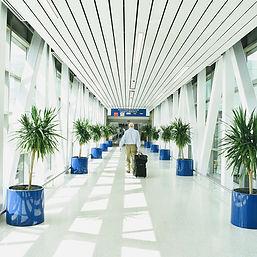 Palms in Cobalt Circular Planters