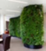 green wall (2).jpg