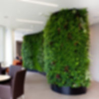 Vertical Garden: Living Green Wall on a Curved Surface