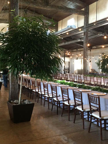 Tree Rental for a Formal Event