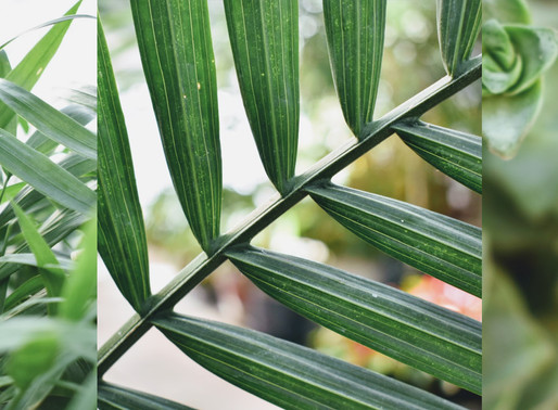 6 Reasons to Understand Biophilic Design: Everything You Need to Know