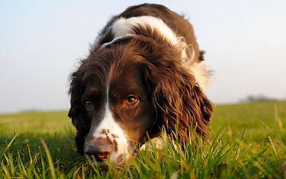 adiestramieto de perros en madrid