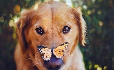 adiestrador canino en tu casa madrid