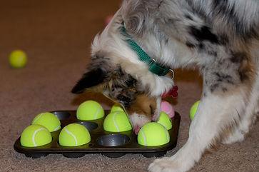 actividades para perros usando el olfato
