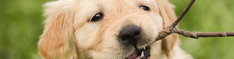 enseñar conducta a tu cachorro