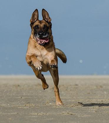 frecuencia con la que debe pasear tu perro